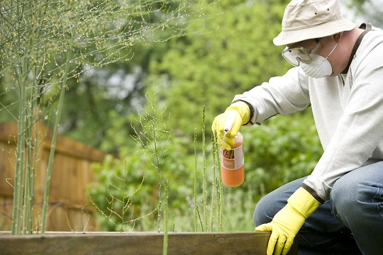 pesticide-on-some-plants
